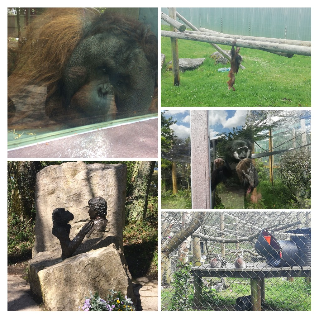 A collage containing five images taken at monkey world