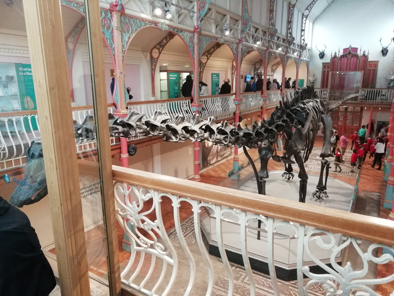 Dippy the Dinosaur as seen at the Dorset county museum