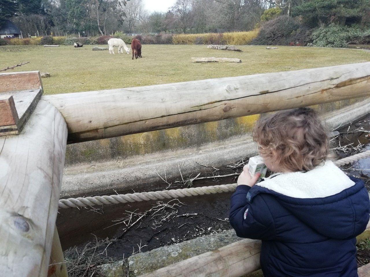 Blackpool Zoo 🐒